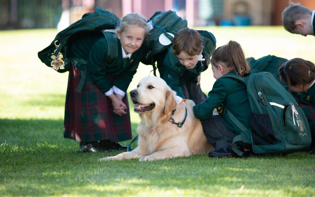 Therapy dog Wilson helps increases self-esteem in students
